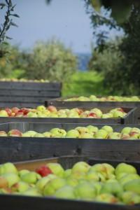 Äppelbingar
